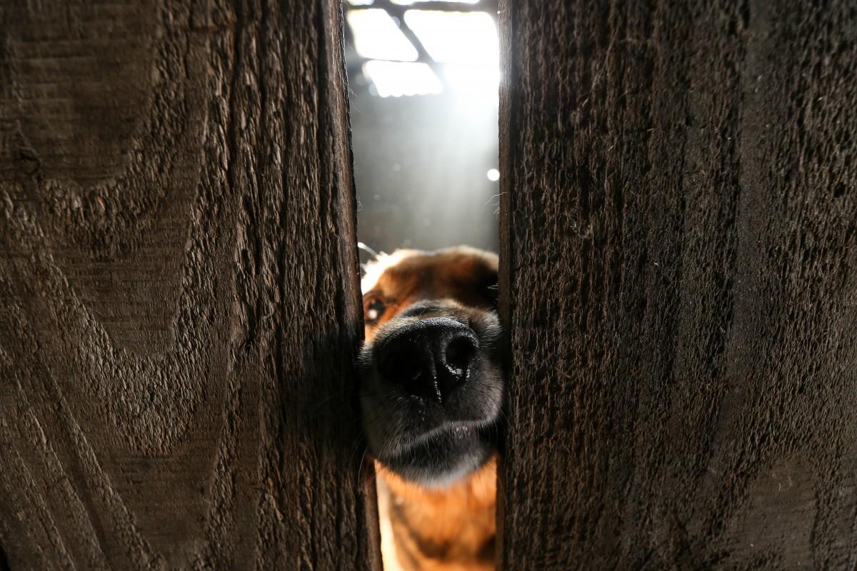 Домашние собаки пагубно влияют на дикую природу / УНИАН