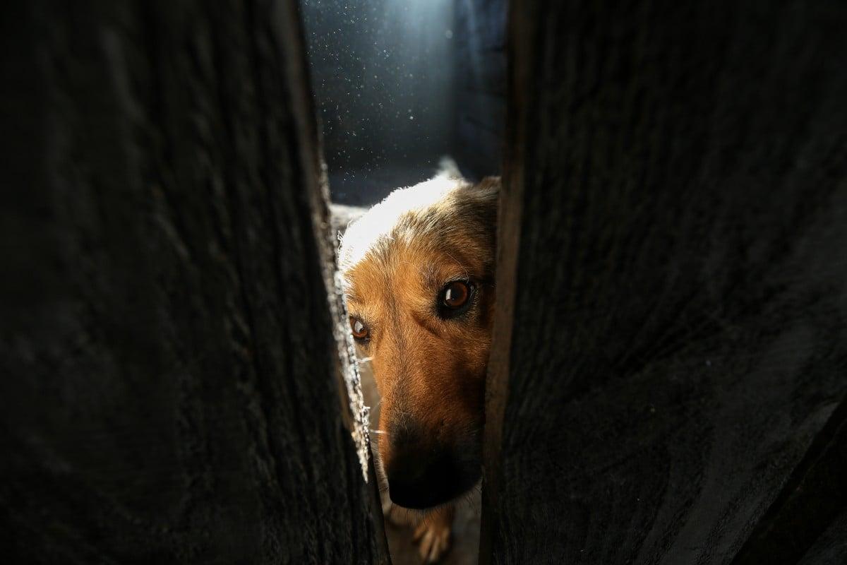 Майбутній закон заборонятиме бити, калічити тварин і їх топити / УНІАН