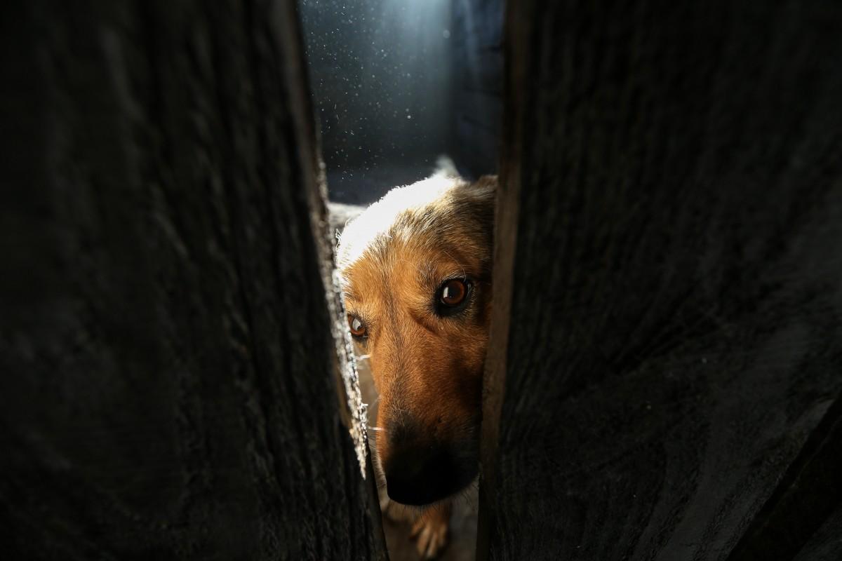 Одна особенность отличает собак от волков / УНИАН