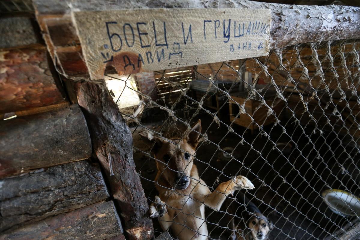 Проблема бездомных животных в Украине стоит достаточно остро \ УНИАН