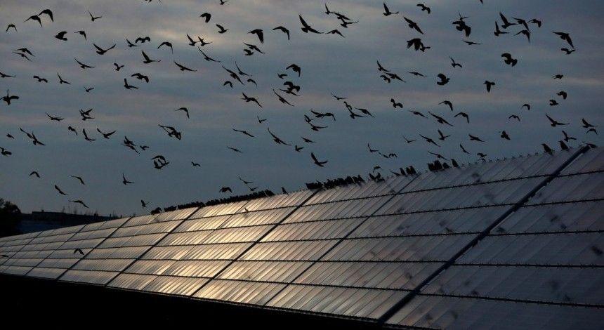 Туреччина хоче побудувати в Україні більше десятка сонячних електростанцій