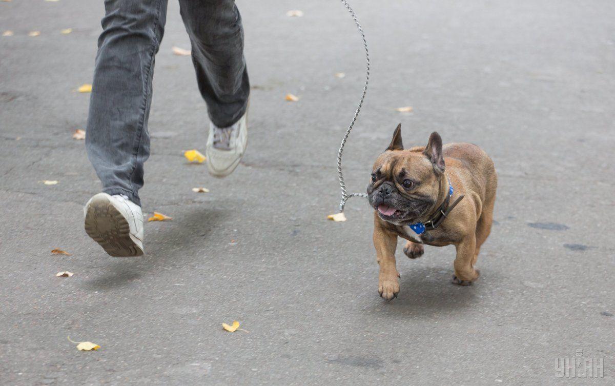 В Киеве живодер убил собаку своей матери / УНІАН