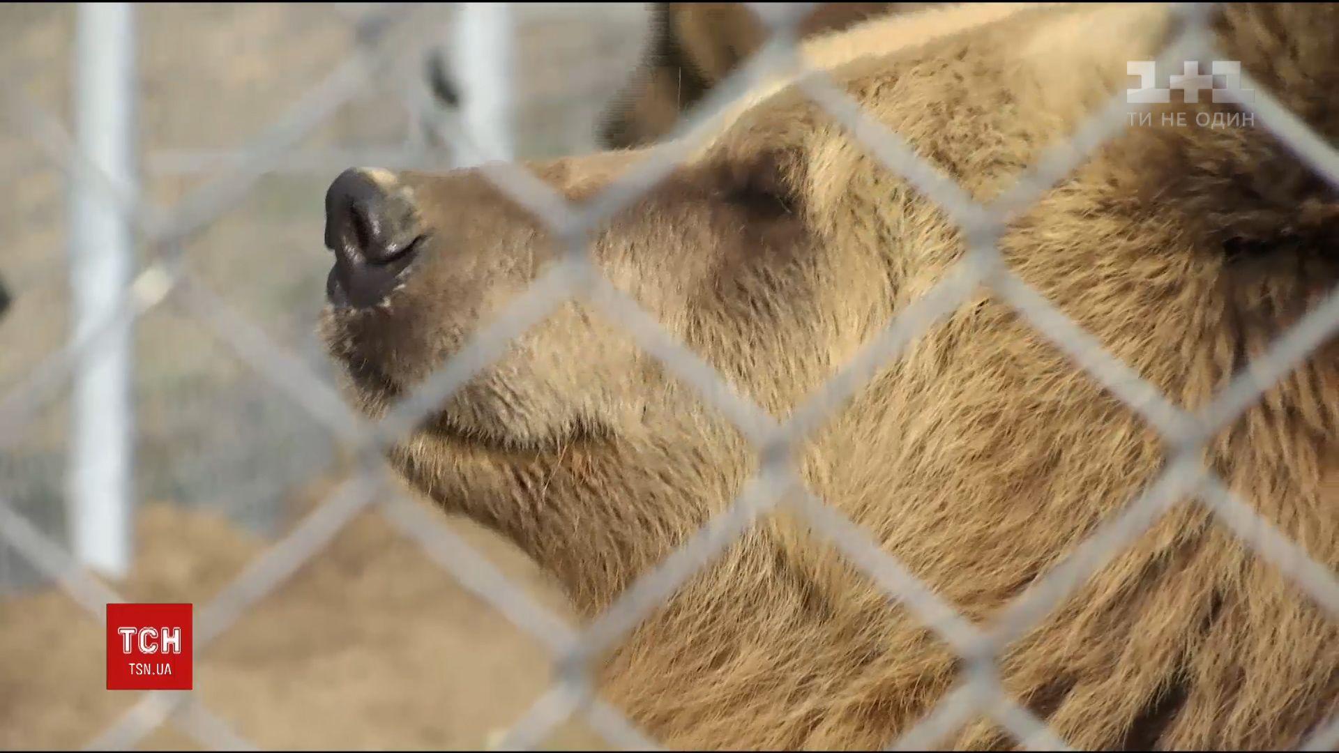 Тварина захворіла на стереотипію / Скріншот відео ТСН