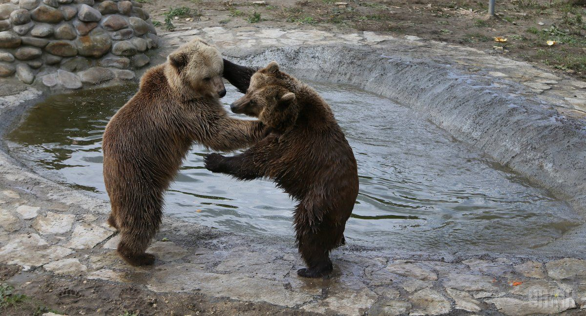 Медведи - это исчезающий вид / фото УНИАН