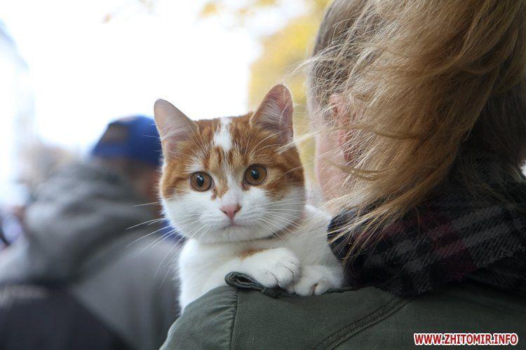 Киевляне смогут бесплатно вакцинировать животных от бешенства / фото Zhitomir.info