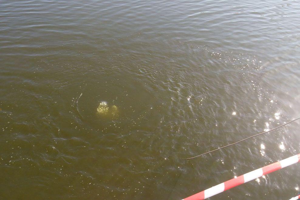 Как затонул автомобиль - неизвестно / Фото dsns.gov.ua