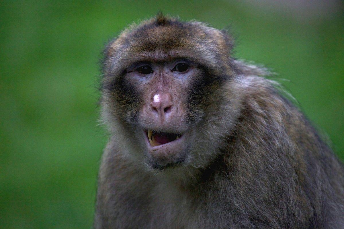 Женщине посоветовали получить разрешение на перевозку этих животных / Фото via stepsinpairs flickr.com