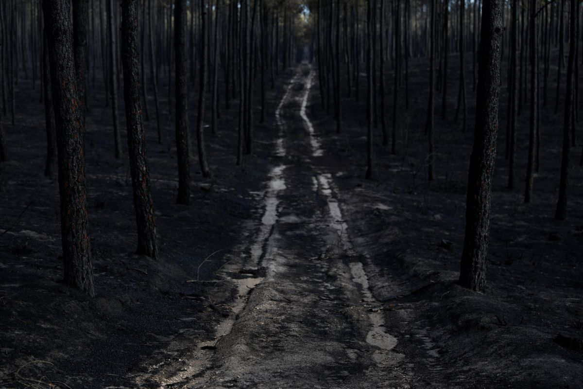 Лес после пожара, Португалия / REUTERS