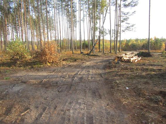 На Житомирщині викрили черговий факт вирубки лісів / фото zt.npu.gov.ua