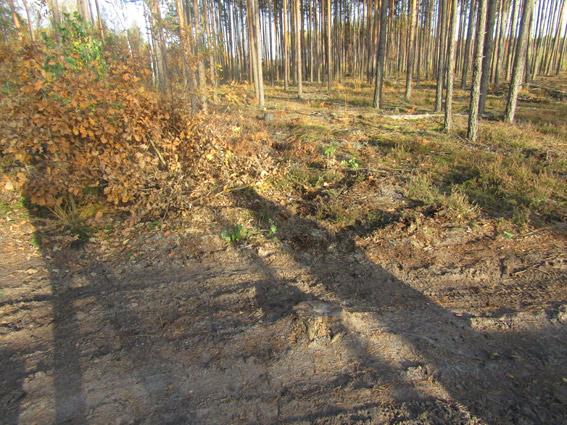 Всего было срезано 14 деревьев / фото zt.npu.gov.ua