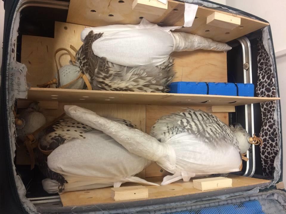 Злодій здав живих птахів у багаж / Фото facebook.com/SFSofUkraine