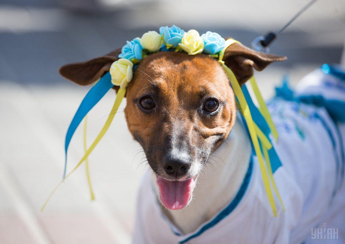 ВУкраїні хочуть ввести податок накотів і собак: стали відомі деталі