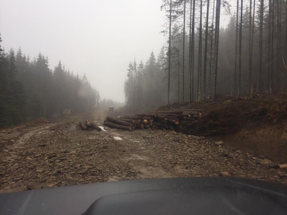 вырубка карпатских лесов фото взгорке гребенными