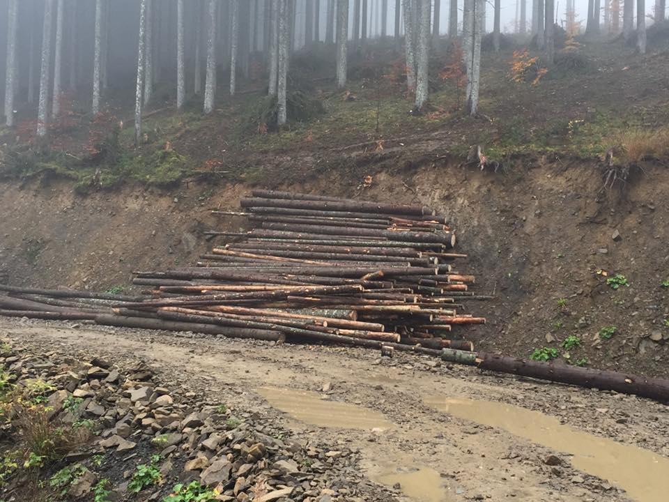 Делятинське лісове господарство вирубало дерев на мільйон гривень