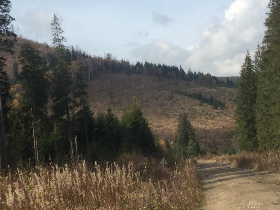Предыдущий мораторий на вырубку лесов в Карпатах прекратил действовать в 2011 году / Фото: facebook.com/vasul.andriyv