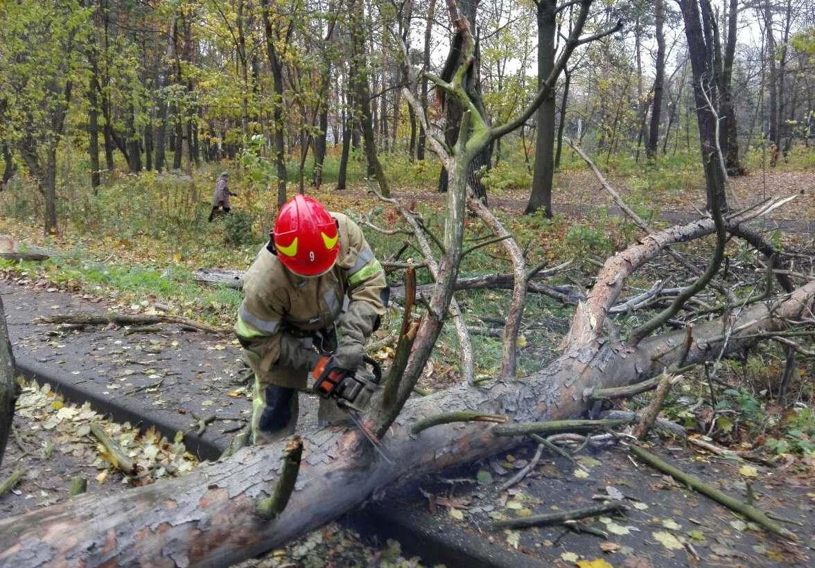 Вчера в Виннице дерево упало на 11-летнюю девочку / иллюстрация informator.ua