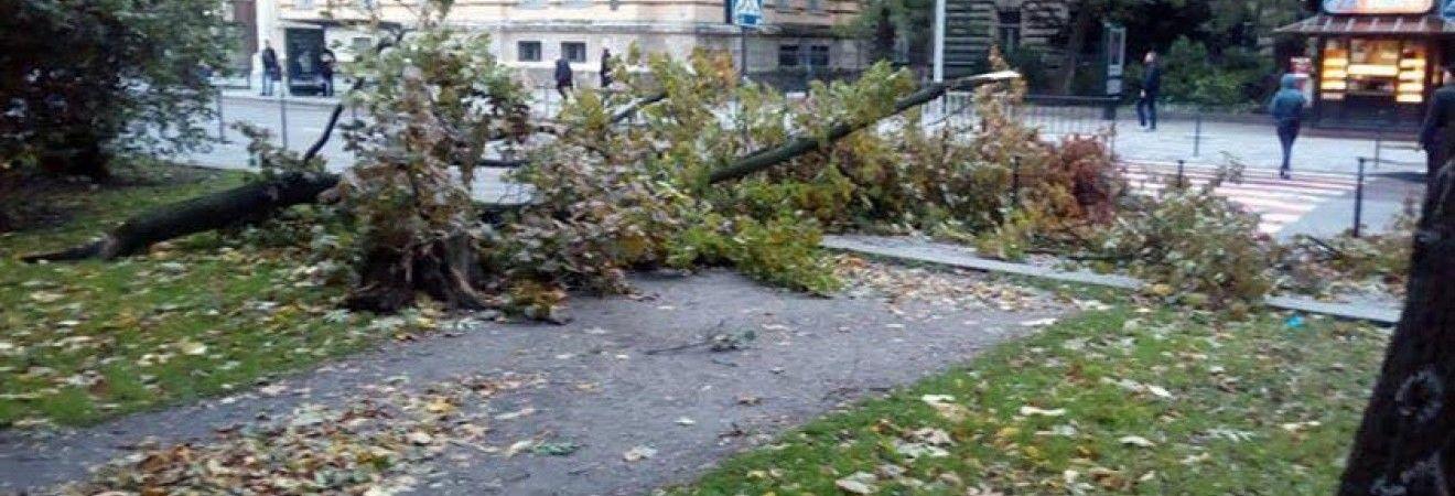 Ночью на Украину обрушилась буря: ветер повалил деревья, почти 200 населенных пунктов обесточены (фото, видео)