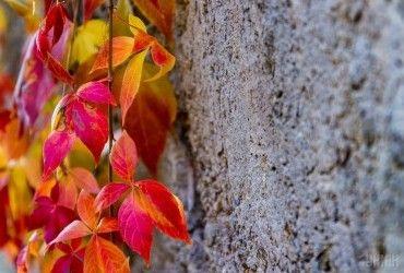 Спека, заморозки і перший сніг: синоптики розповіли, якою буде погода в Україні восени