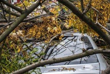 В Одесі буревій повалив більше десятка великих дерев