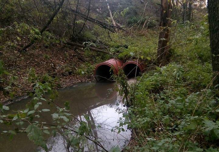 Забруднення каналізаційними стоками Голосіївського національного парку / Фото facebook.com/oleksandr.sokolenko
