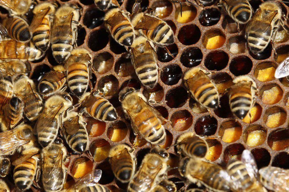 Пасічники скаржаться на п'яних бджіл / Ілюстрація REUTERS