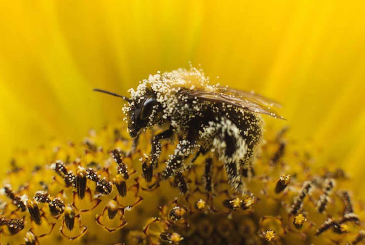 Пчелы и бабочки-монархи — лучше всего иллюстрируют проблемы и упадок насекомых \ фото REUTERS