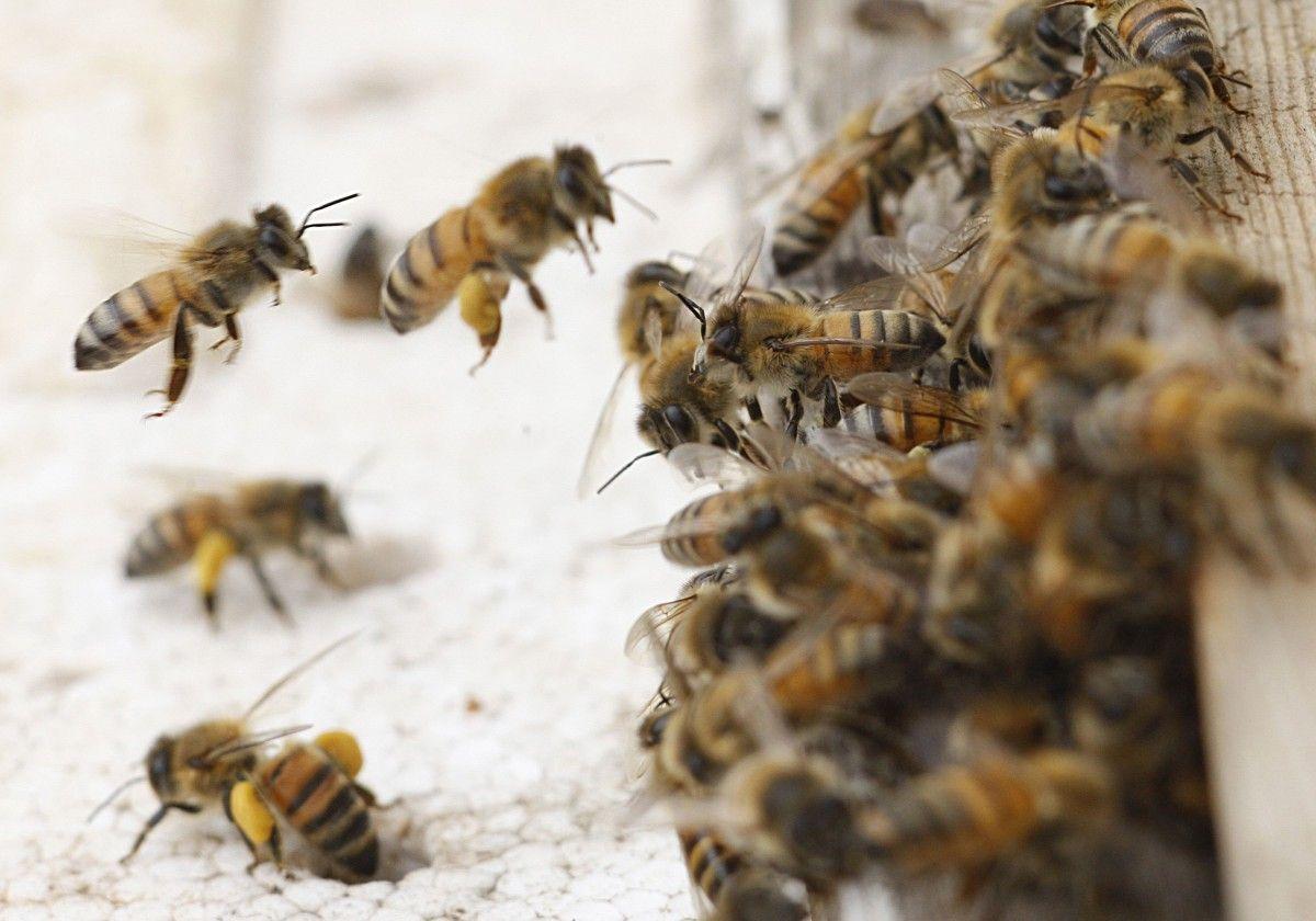 У селі Малий Шпаків чоловік повернувся з пасіки й помер - покусали бджоли / фото REUTERS