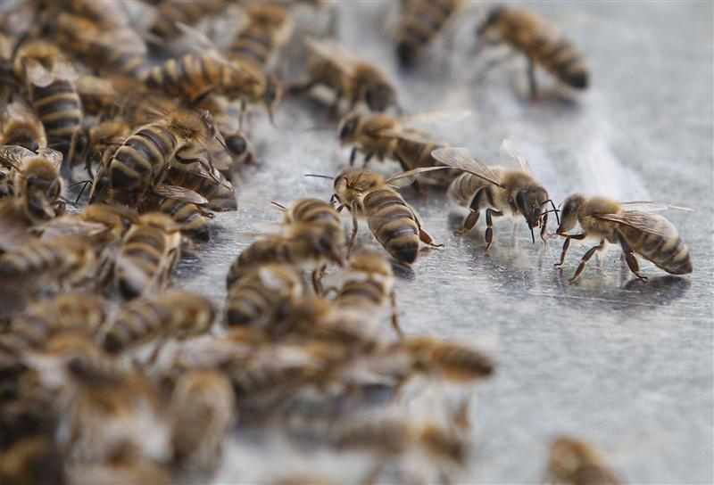 В Укрпошті ожили бджоли, але відправник відмовляється їх забирати / ілюстрація / REUTERS