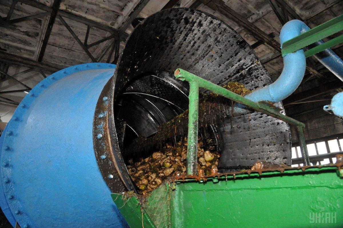 Украинские заводы уже произвели более 250 тысяч тонн сахара / фото УНИАН