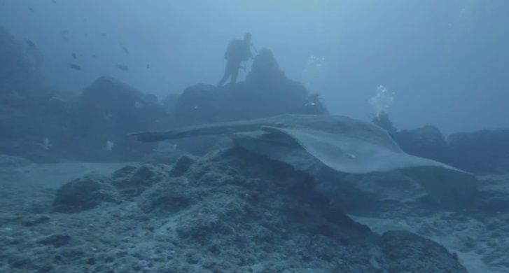 Величезного ската показали на відео / Скріншот