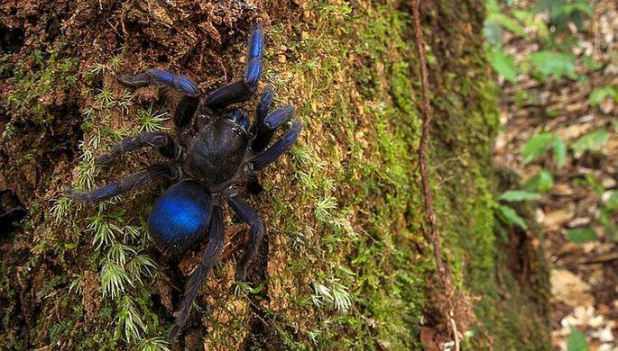 Исследователь Эндрю Снайдер наткнулся на тарантула случайно / фото Andrew Snyder