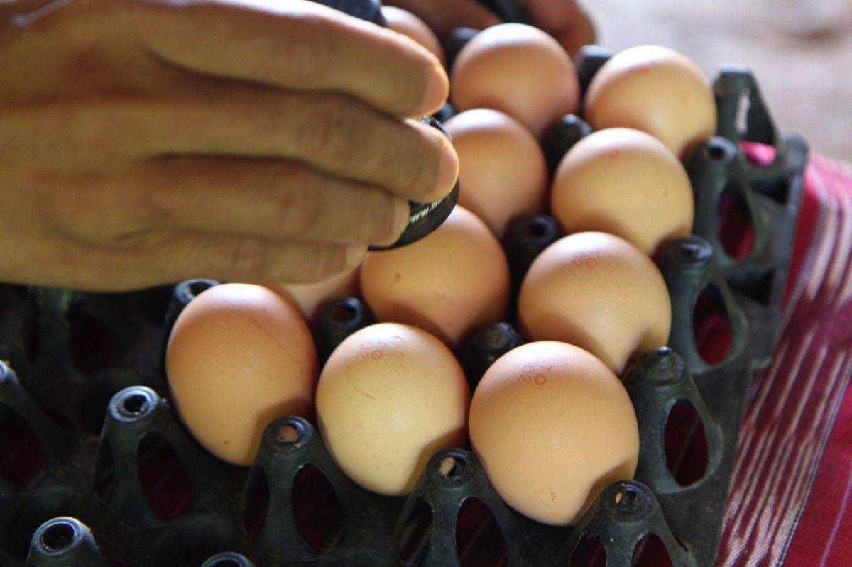 Яйца могут подорожать более чем в два раза / Иллюстрация REUTERS