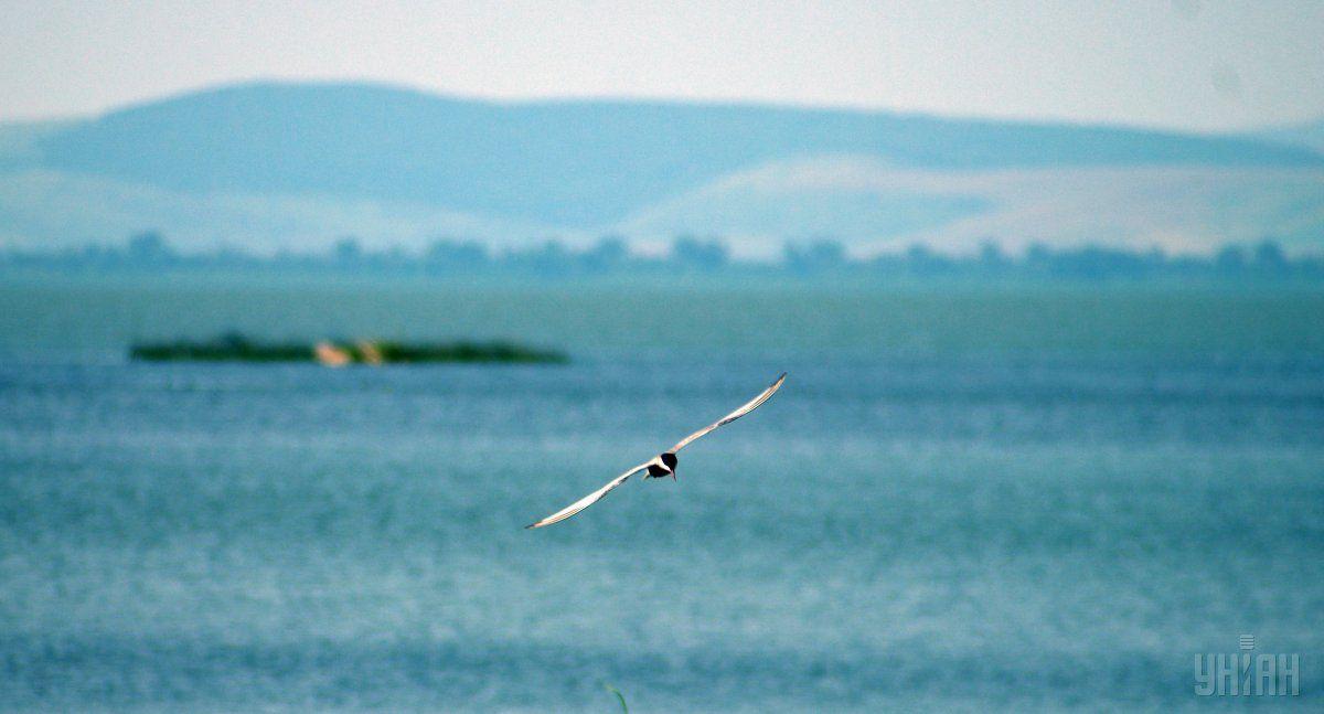 Украинская дельта Дуная / фото УНИАН