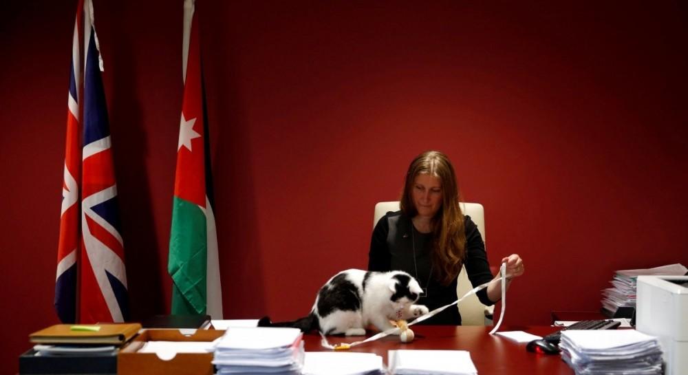 ВИордании впервый раз взяли нагосслужбу кота