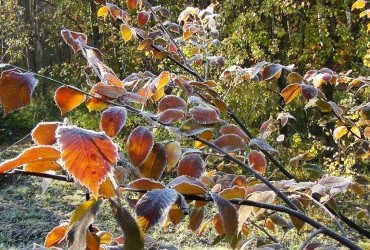 На Україну насуваються заморозки