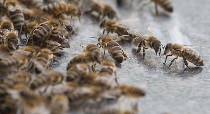 На Тернопільщині в одному з районів через кроплення полів хімікатами без попередження масово загинули бджоли