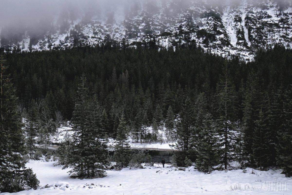 Заборона рубок на гірських схилах Карпат