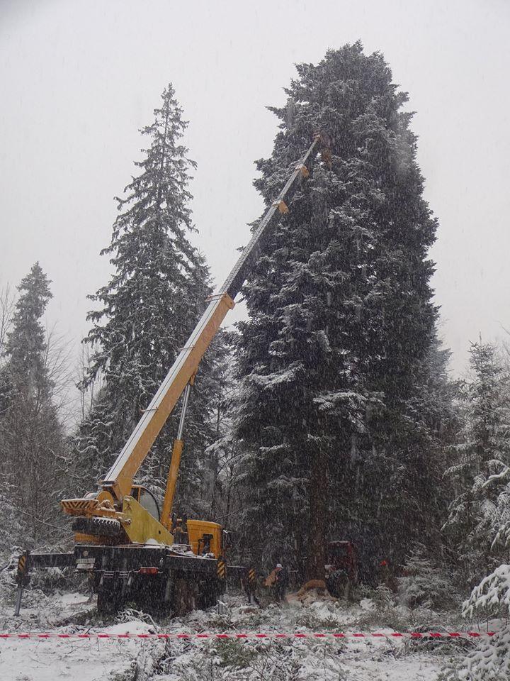 Главную елку будет установлена на Софийской площади в Киеве / Фото УНИАН