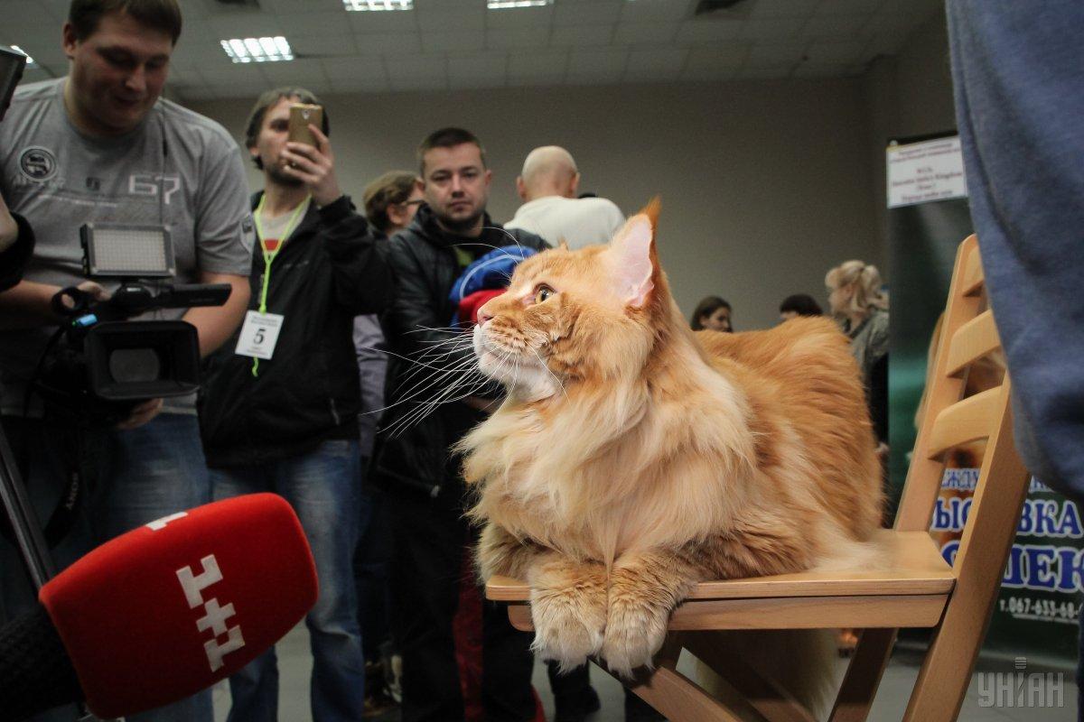 Кекс получил признание / Фото УНИАН