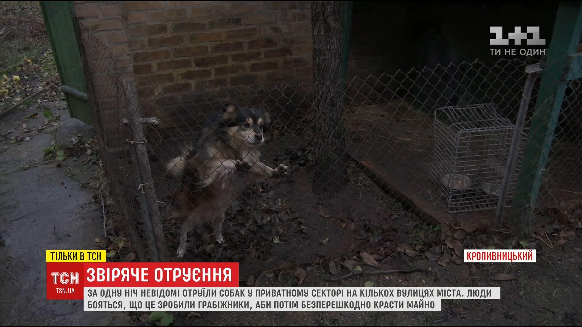 Хозяева собак убеждены, убийства злоумышленники готовили тщательно / Скриншот видео ТСН