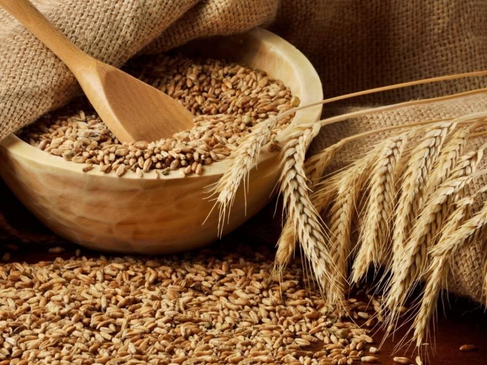 Наразі збір зернових та зернобобових культур на Житомирщині завершений на 95% / фото oda.zt.gov.ua