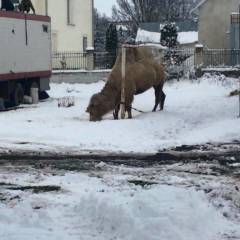 Животное просто оставили посреди местного стадиона / фото facebook.com/sashatodorchuk