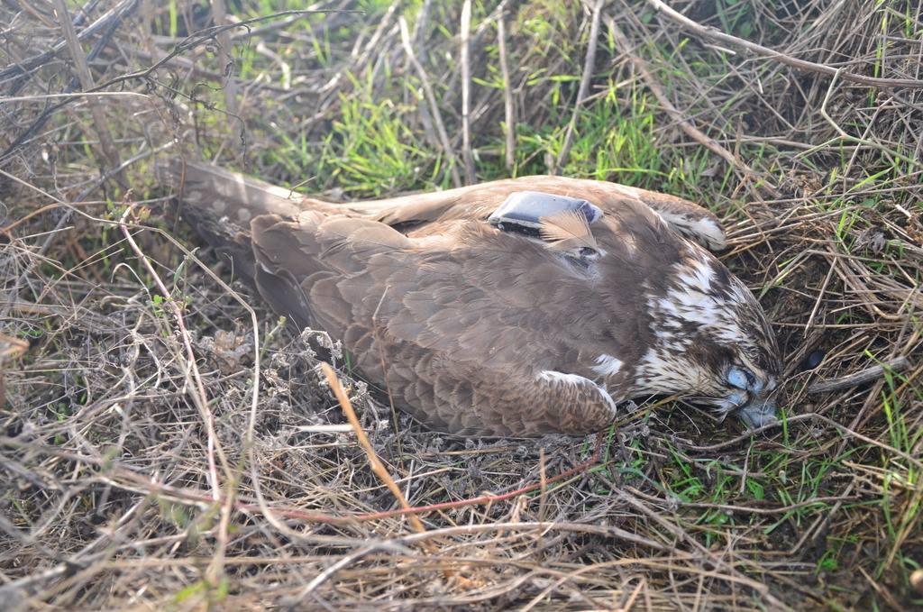 Птицу убили ради забавы, говорит специалист / фото facebook.com