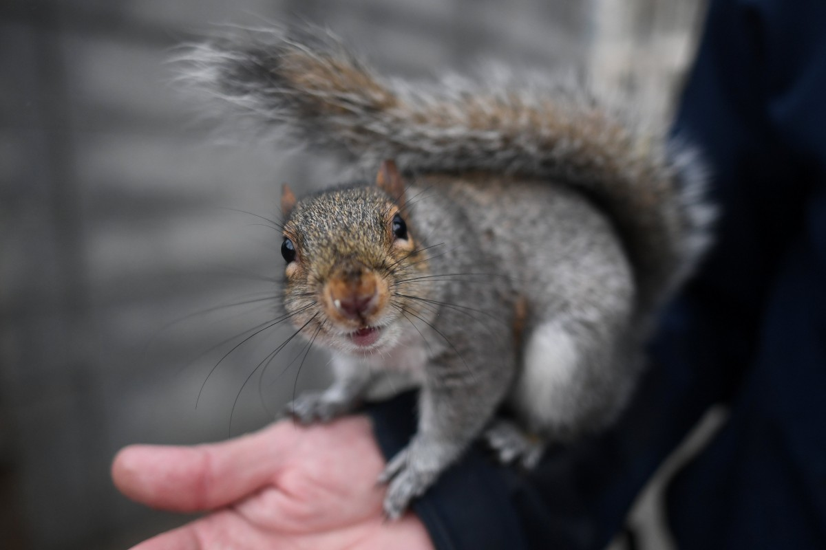 В американській авіакомпанії вирішили, що білка не може надавати емоційну підтримку / Ілюстрація REUTERS