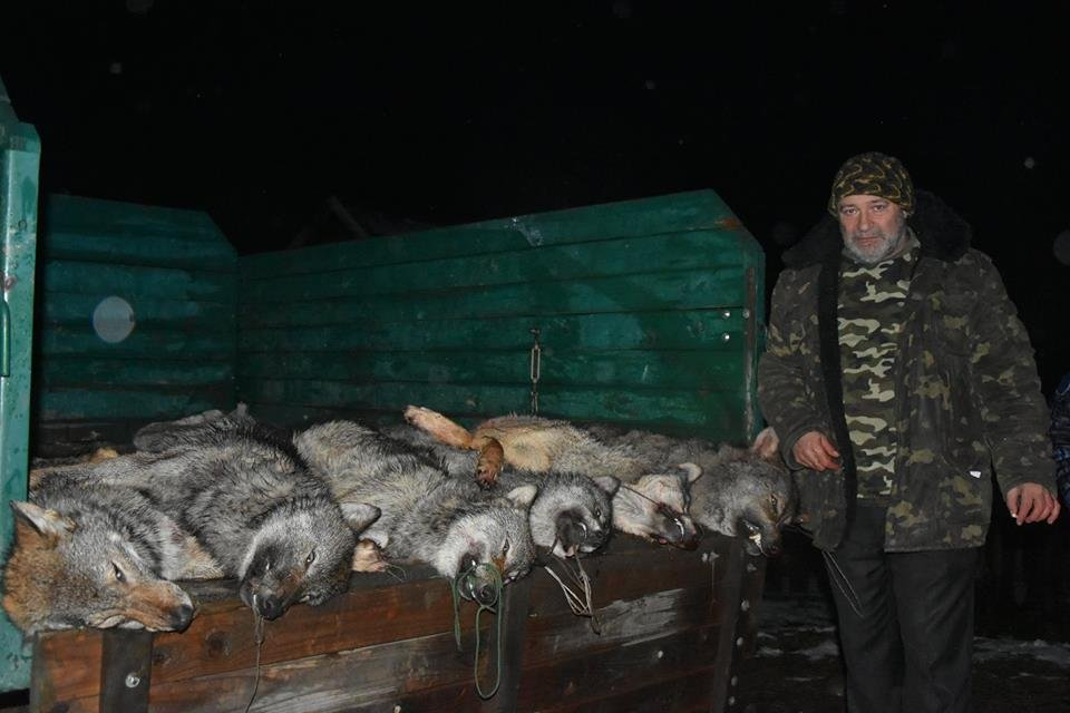 Охотники убили шестерых волков на Закарпатье / фото Новости Закарпатья