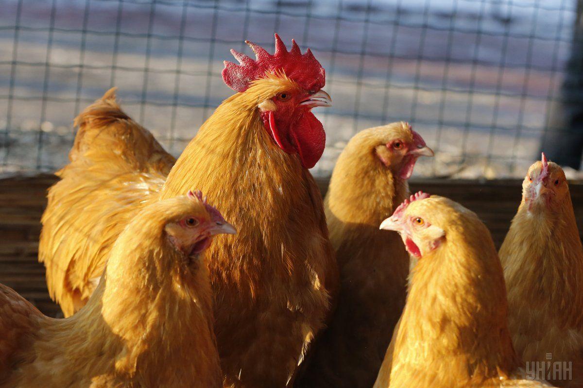 ЕБРР предоставит кредит крупнейшему производителю курятины в Украине агрохолдингу