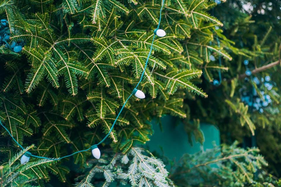 Лесхозы заготавливают елки со специальных плантаций / Facebook Folk Ukraine