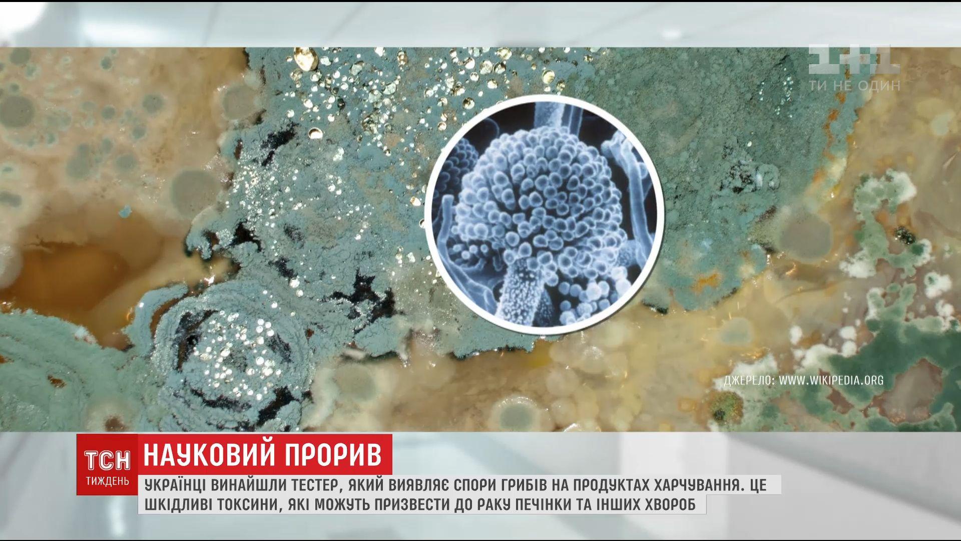 Украинцы изобрели тестер, который обнаруживает споры грибов / скриншот
