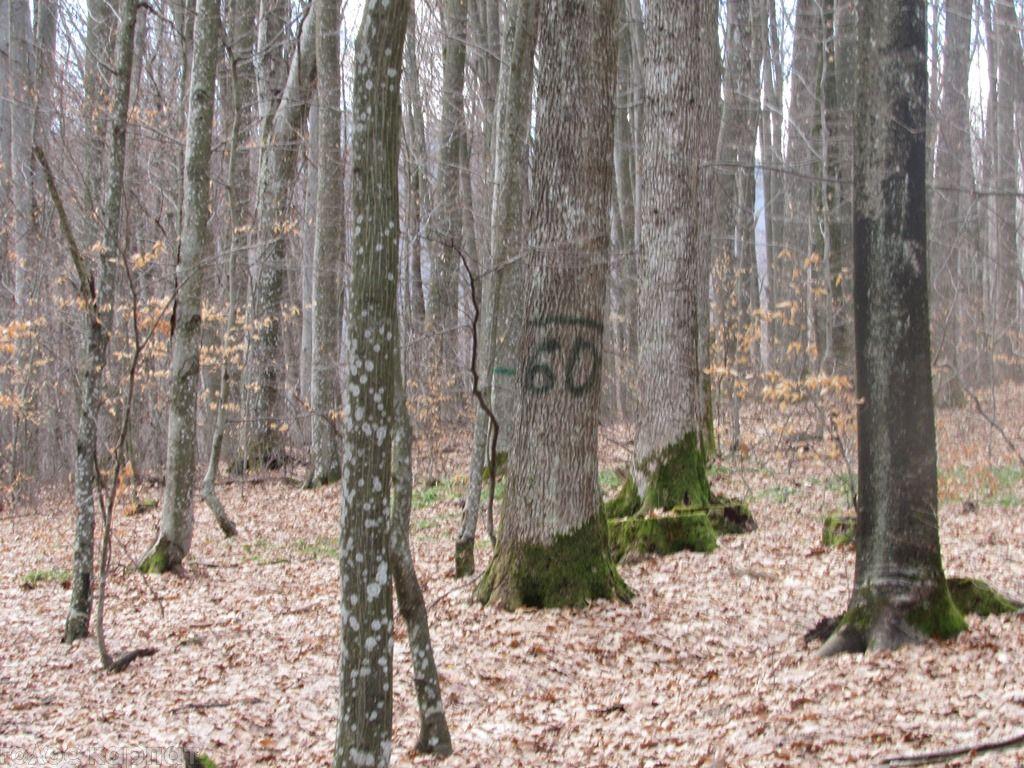 Территория заказника – это хорошо сохранен лесной ландшафт / фото cdn.goloskarpat.info