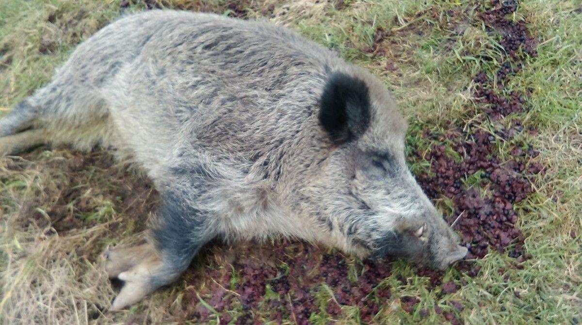 Животное дорвалось до фруктов из домашнего вина, а затем уснуло среди остатков / фото Paweł Kowalski via Facebook
